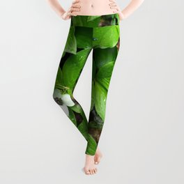 Canadian bunchberry Leggings