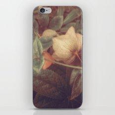 SECRET FLOWERS OF PARADOX iPhone & iPod Skin