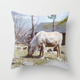Caribou (Montreal, Canada) Throw Pillow