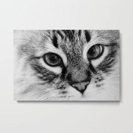 Feline Gaze Metal Print