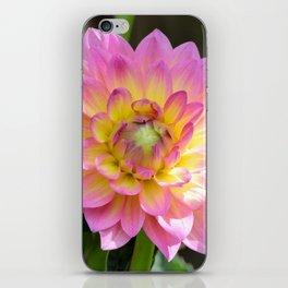 Sunny Dahlia iPhone Skin