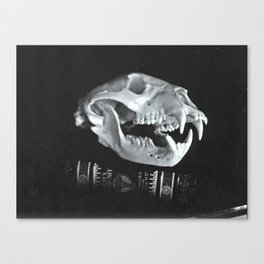 Bear Skull Still Life Canvas Print