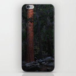 Magic Forest iPhone Skin