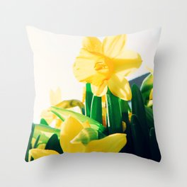 Close up Narcissus 10 Throw Pillow