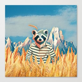 Raccoon in the wheat field Canvas Print