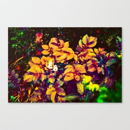 Thought Garden Canvas Print