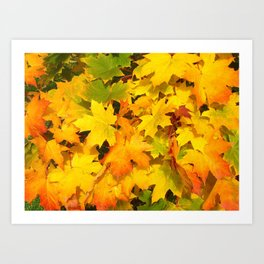 Fall Maple Leaves with Autumn Colors Art Print