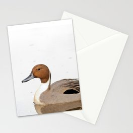 Reflections of a Northern Pintail Duck Stationery Cards