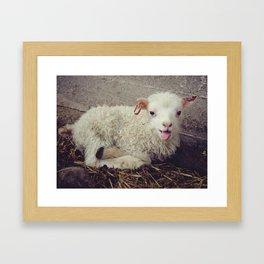 Sheep #5 Framed Art Print