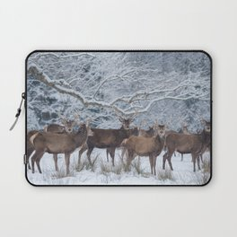 Red deers  from wintry Killarney National Park Laptop Sleeve