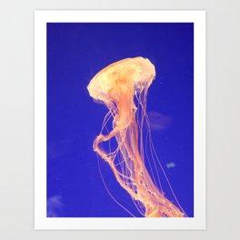 Sea Nettle Jellyfish #2 Art Print