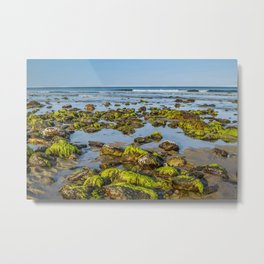 Hampton Seaweed Metal Print