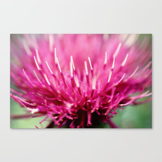 Frosted Tips Canvas Print