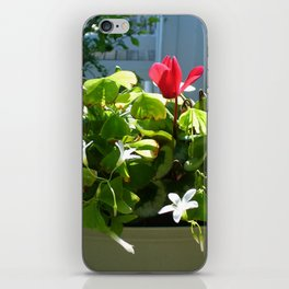 Red White and Green iPhone Skin