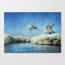 Swans over frozen lake Canvas Print