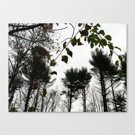 Autumn 11 Canvas Print