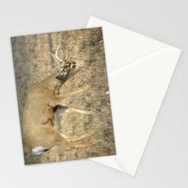 Mule tail Deer, Buck2 Stationery Cards