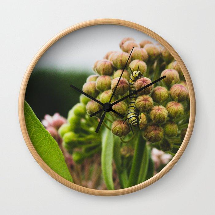 Monarch Caterpillar Wall Clock