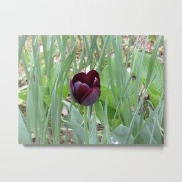 Burgundy Tulip Metal Print