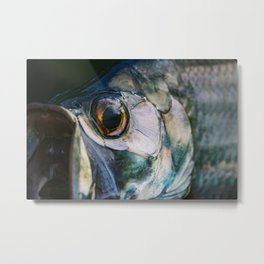Tarpon Eye Metal Print