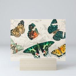 Butteflies Mariposas Papillons Schmetterlinge - Vintage Book Illustration Mini Art Print