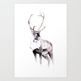 Caribou Art Print