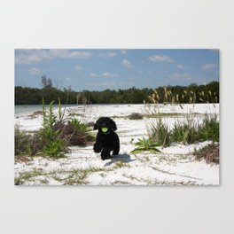 The pup  Canvas Print