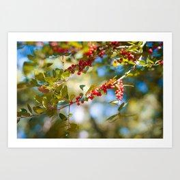 Fall bloom Art Print