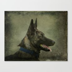 Herder Shepherd Canvas Print