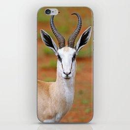 Springbok in Namibia, wildlife iPhone Skin
