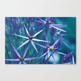Allium Blue Canvas Print