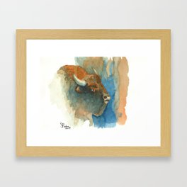 Wary Bison Framed Art Print