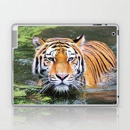 Tiger   Tigre Laptop & iPad Skin