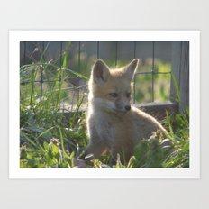 fox IV Art Print
