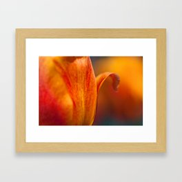 Tulip Bends Framed Art Print