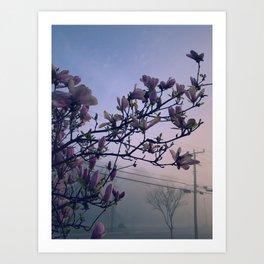 Magnolia Morning Art Print