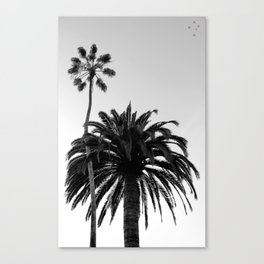 Palm Trees Windansea Canvas Print