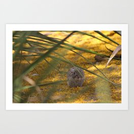 Hidden Rabbit Among Golden Palo Brea Flowers Art Print