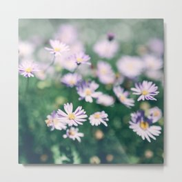 Wild Daisies in White and Purple Artsy Photo Metal Print