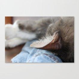 Cozy Cat Poster Canvas Print