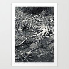 Silvas Snags II Art Print
