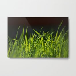 Grass is greener where you water it Metal Print
