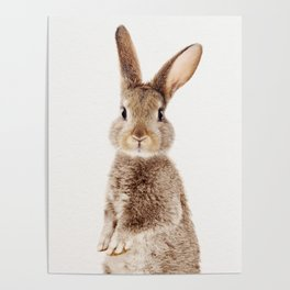 Baby Rabbit, Baby Animals Art Print By Synplus Poster