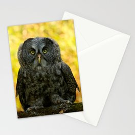 Owl Staring Contest Stationery Cards