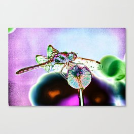DRAGONFLY MAGENTA Canvas Print