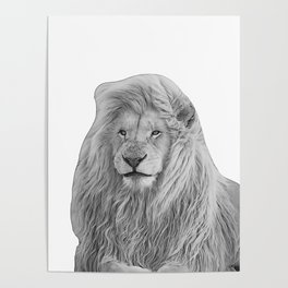 lion b&w Poster