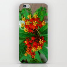 Orange and Yellow Flowers iPhone & iPod Skin