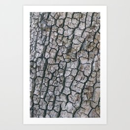 Cracked Bark Texture Art Print