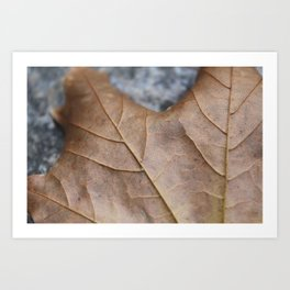 Leaf 1 Art Print