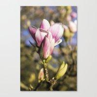 magnolia Canvas Prints featuring Magnolia by AlejandraClick